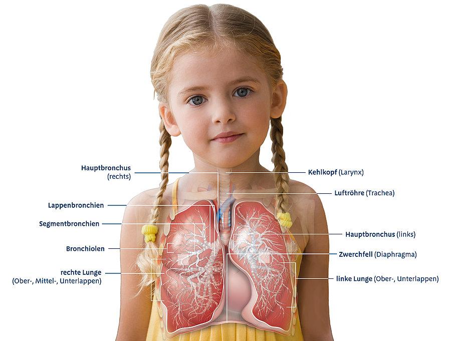 Kind Bronchitis Wie Lange Zuhause Bleiben